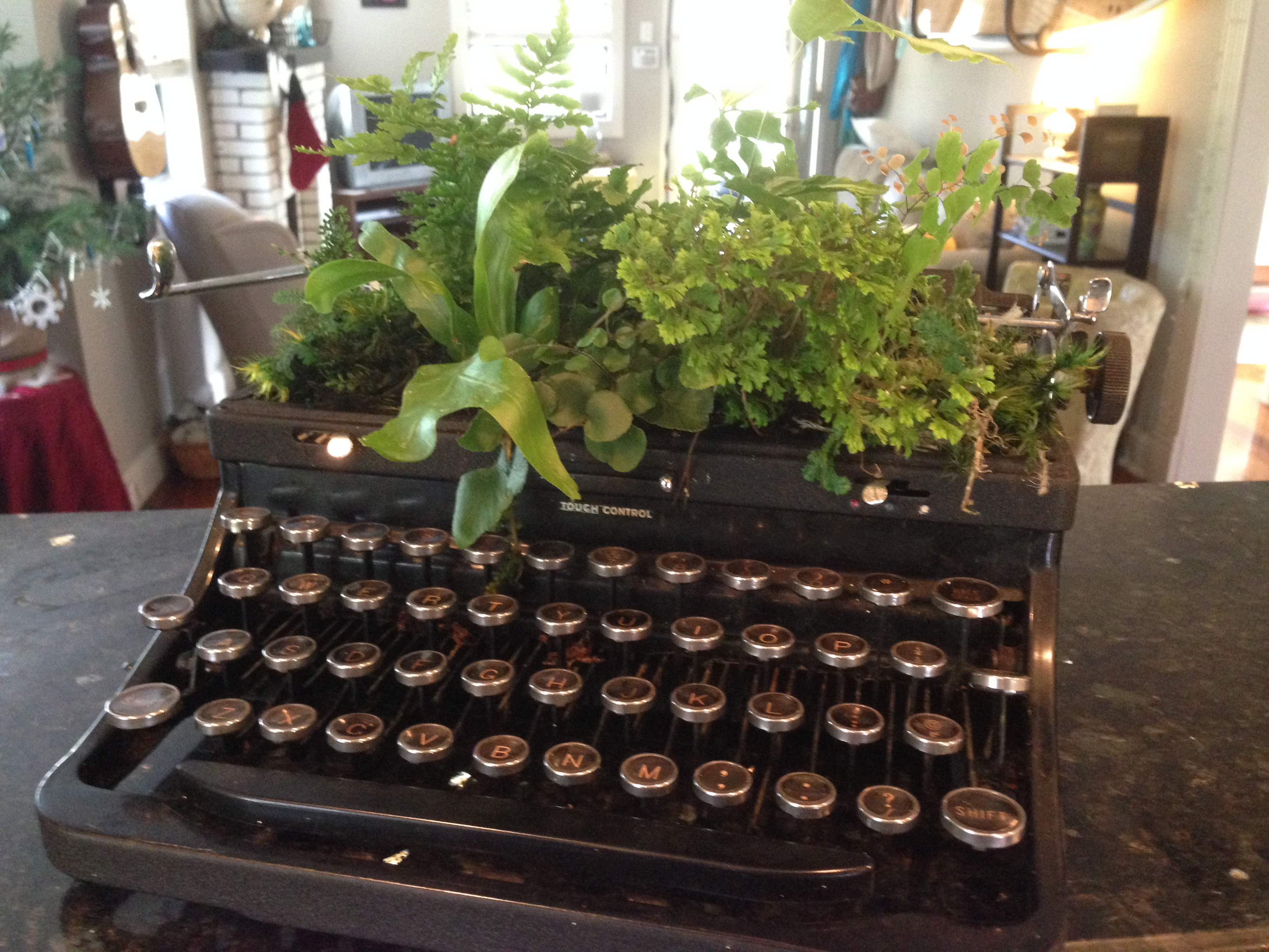 TypewriterFern