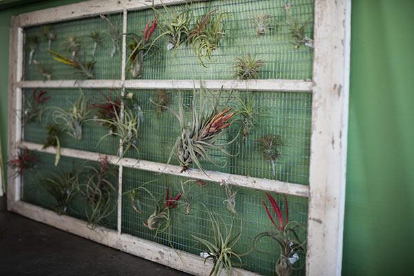 airplant-gardengate