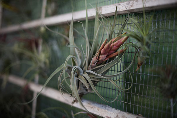 airplant-tampa