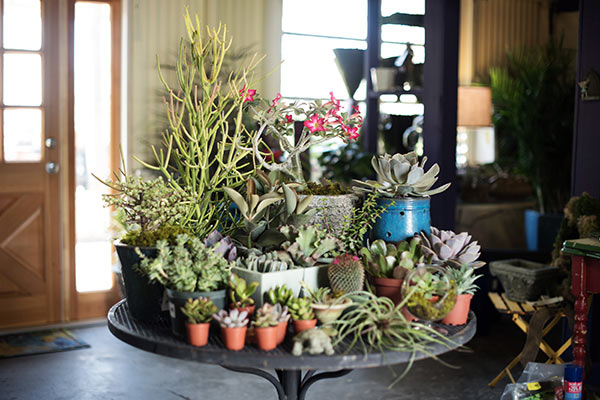 Gardensmith Plant Anchors Our Landscape And Container Concierge Services Offers An Extensive Array Of Materials Pottery Garden