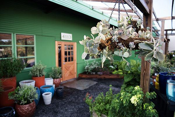 succulent-chandelier