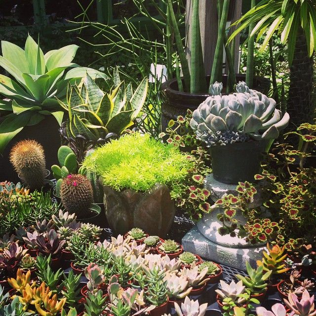 succulents_and_sedum