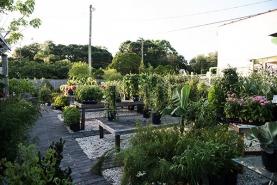outdoor-nursery-tampa
