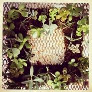 succulent_wreath