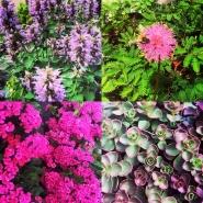 Pretty shop flowers